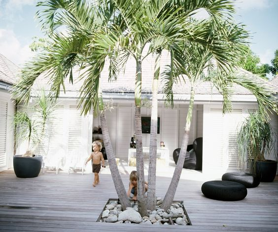mindfood-palm-tree-inspiration