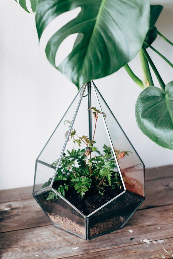 the-future-kept-terrarium