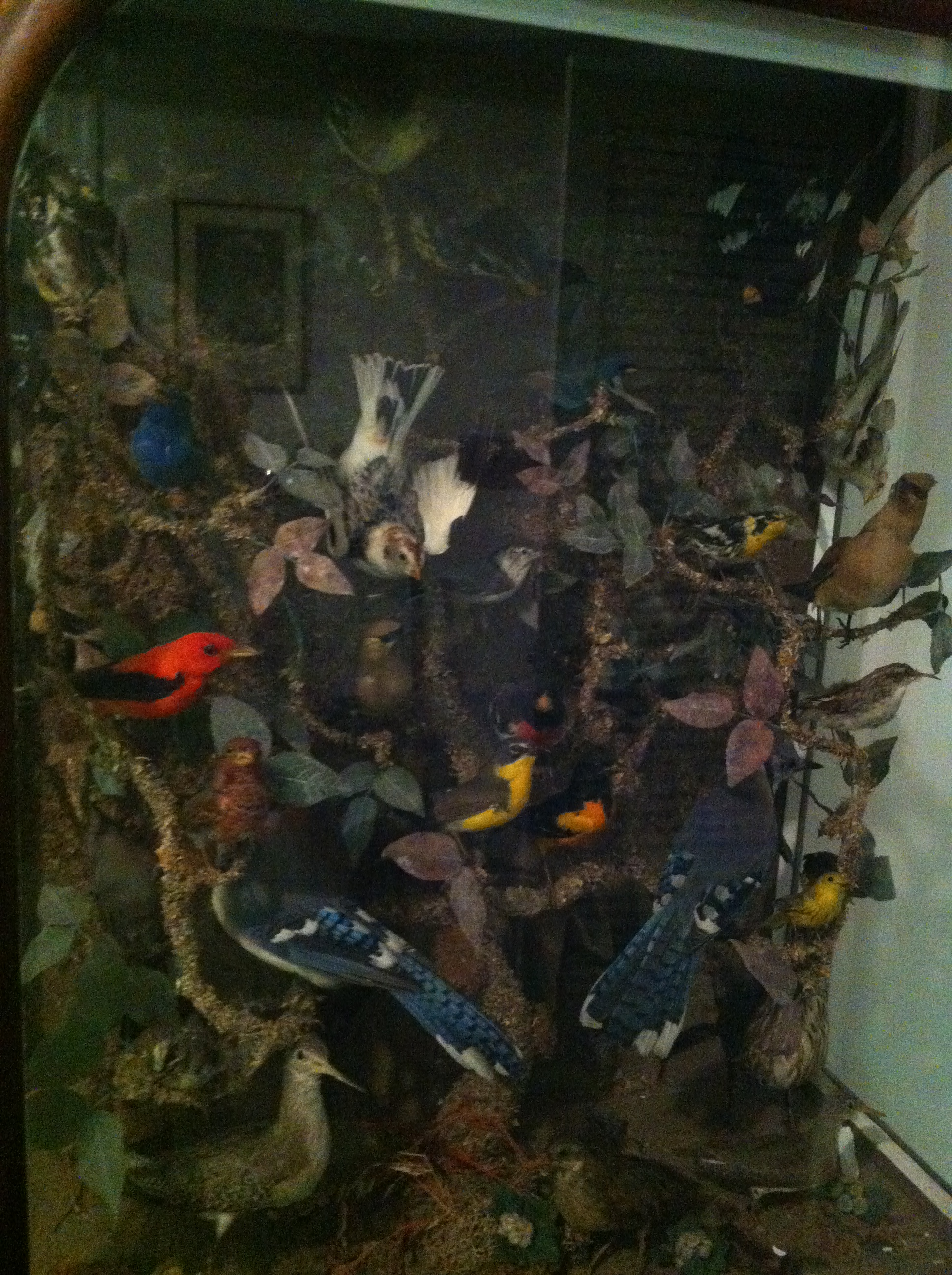 Close up of the birds!